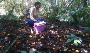 Pamela Felter verzamelt  paddenstoelen