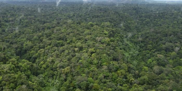 Bomenkennis delen