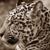 Surinaamse jaguar met uitsterven bedreigd
